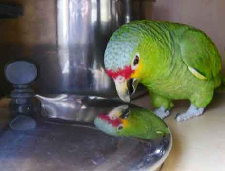 Foster Parrots, Portsmouth Arts Guild Art for a Cause
